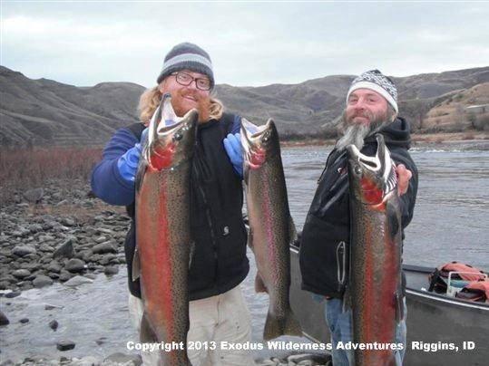 Winter steelhead fishing on idaho 39 s salmon river visit idaho for Steelhead fishing tips