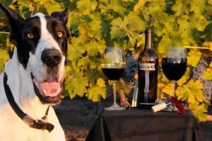 Max the Grape Dane, at Lindsay Creek Vineyards.