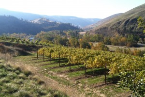 Vineyards at Colter's Creek Winery