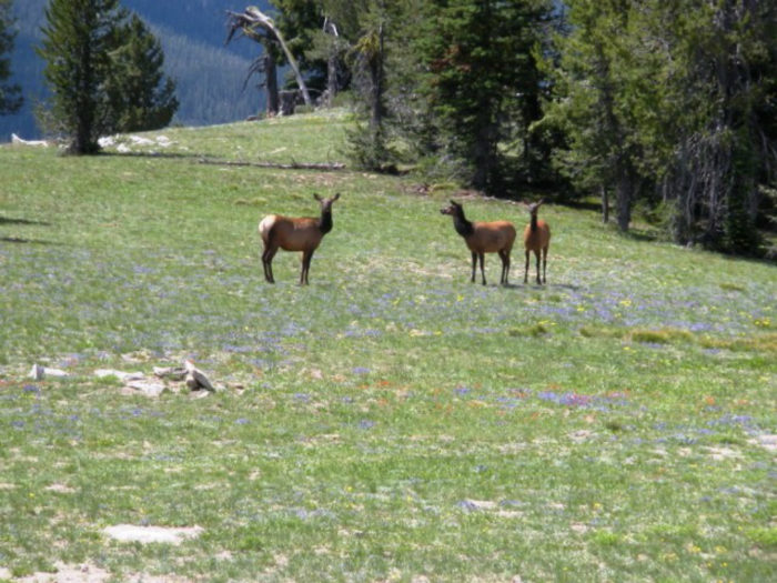 Elk seen along the route.