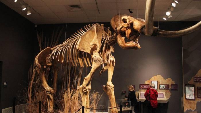 Herrett Center for Arts and Science Mammoth Skeleton