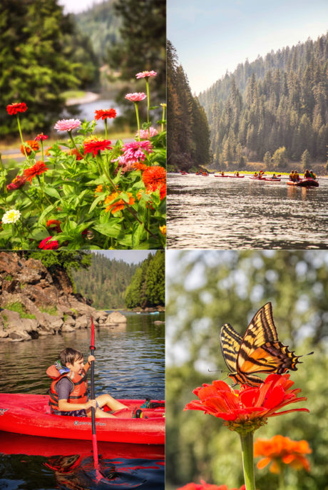 Photo collage: potted flowers, butterfly on flower, river rafters, boy in kayak