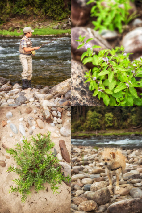 Collage of photos including fly fishing, river rocks, plants and the author's dog.