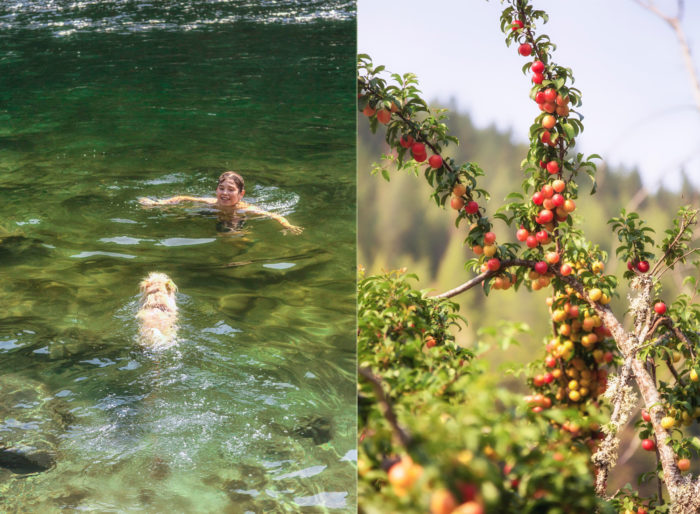 Photo collage: boy & dog swimming in river, local plants