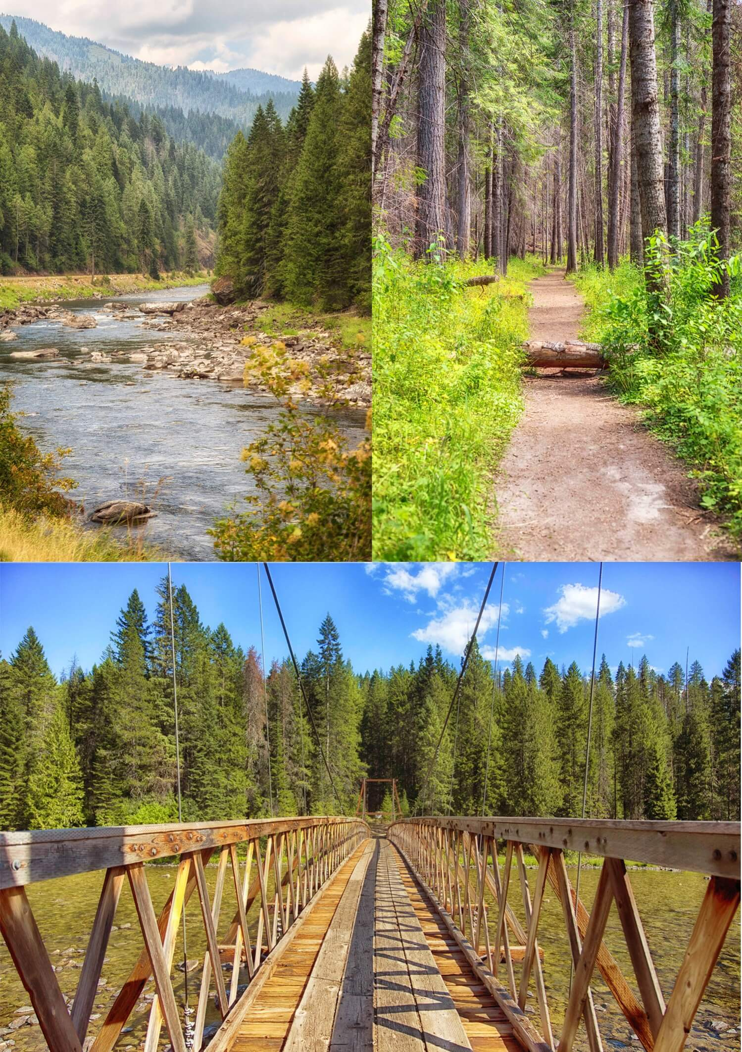 collage: flowing stream, forest path, bridge perspective.