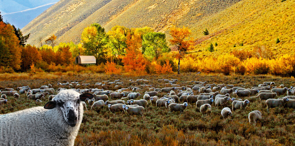 Sun Valley in the Fall. Photo credit: Michael Edminister-Visit Sun Valley.