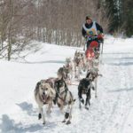 Dogsled race at Great Snow Fest in Teton Valley.