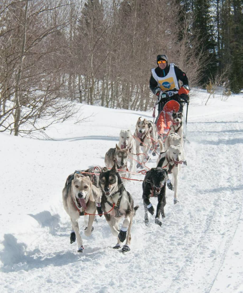 Dogsled the Great Snow Fest Teton Valley