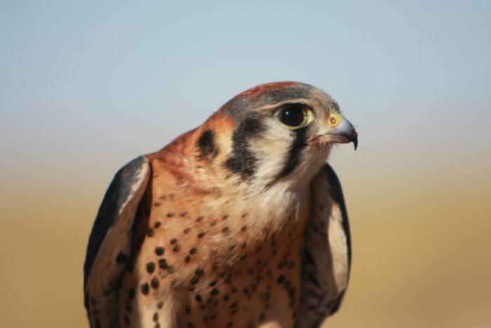 World Center for Birds of Prey