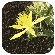 Craters of the Moon flower app
