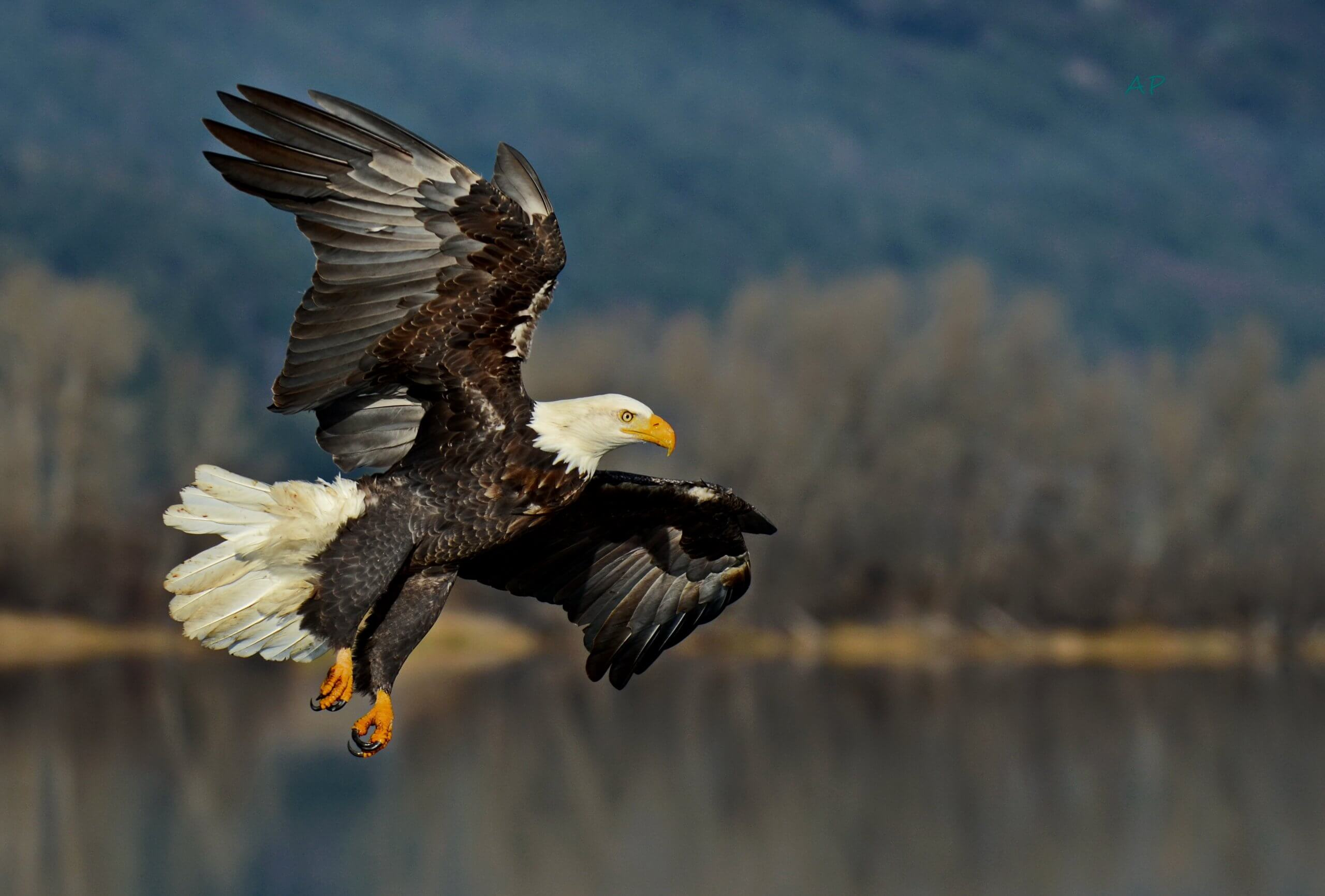 Eagle watching, Bonners Ferry. Photo Credit: Annie Pflueger