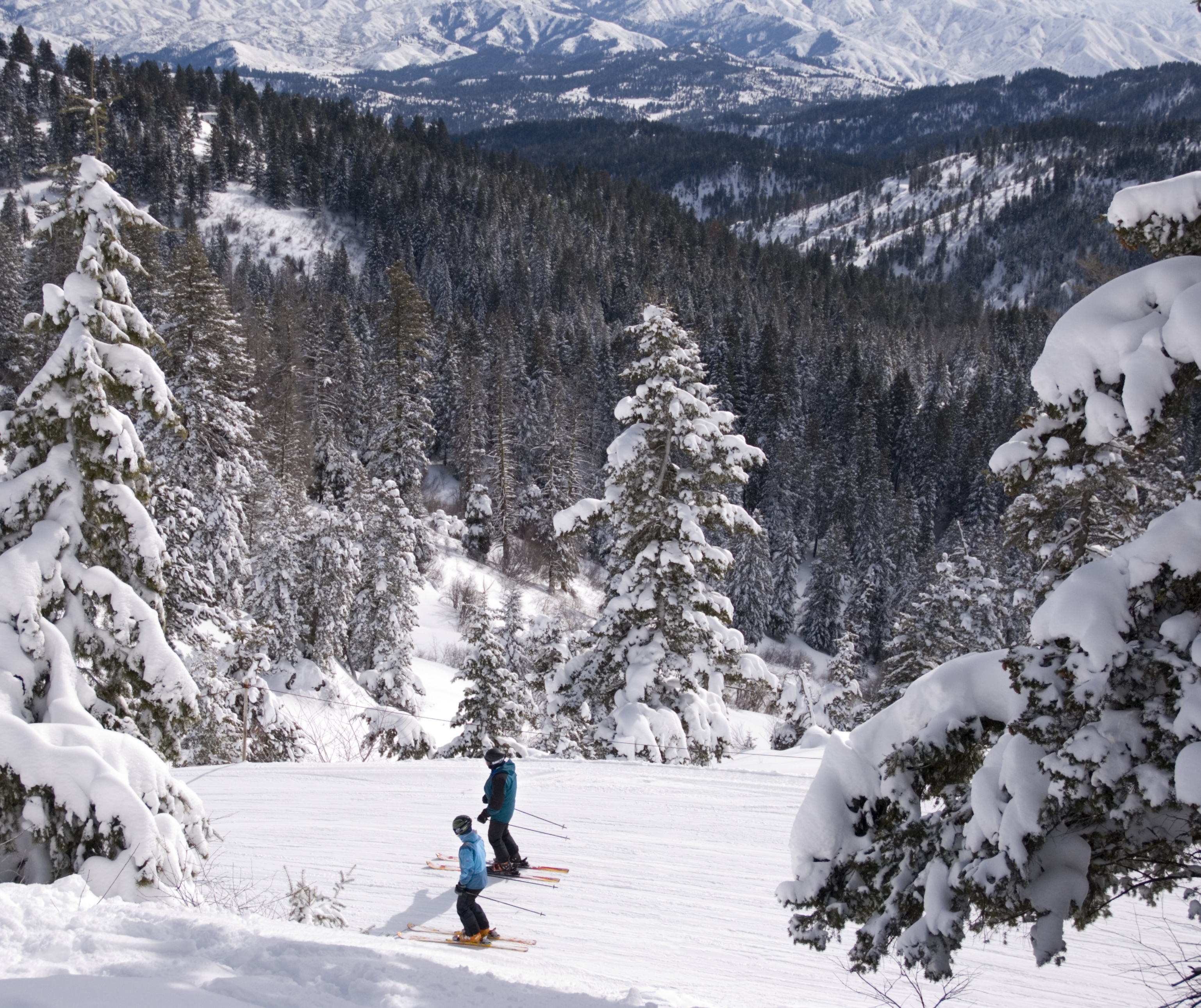 Skiers headed down a run filled with powder.