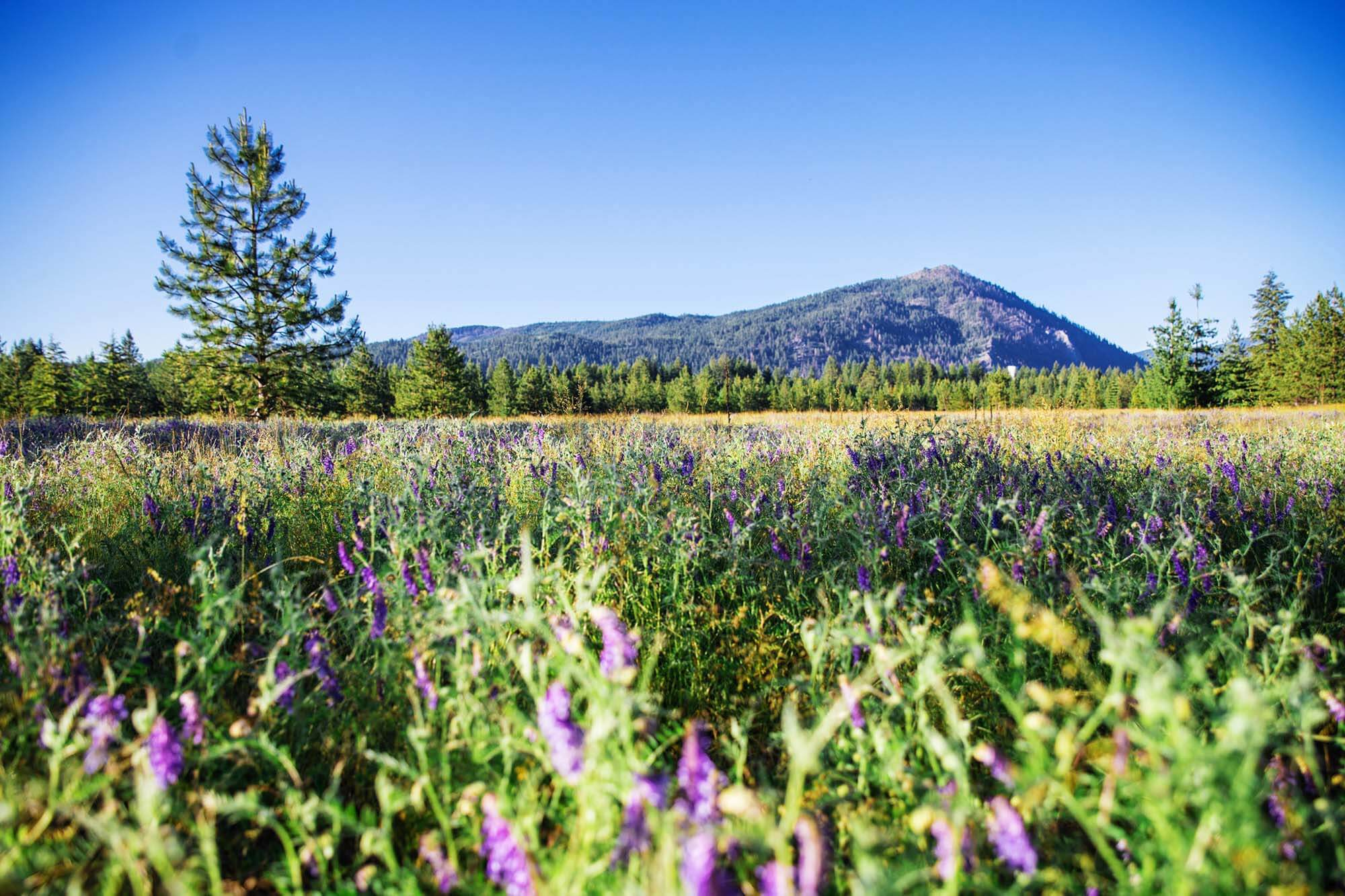 Farragut State Park. Photo Credit: Idaho Tourism.