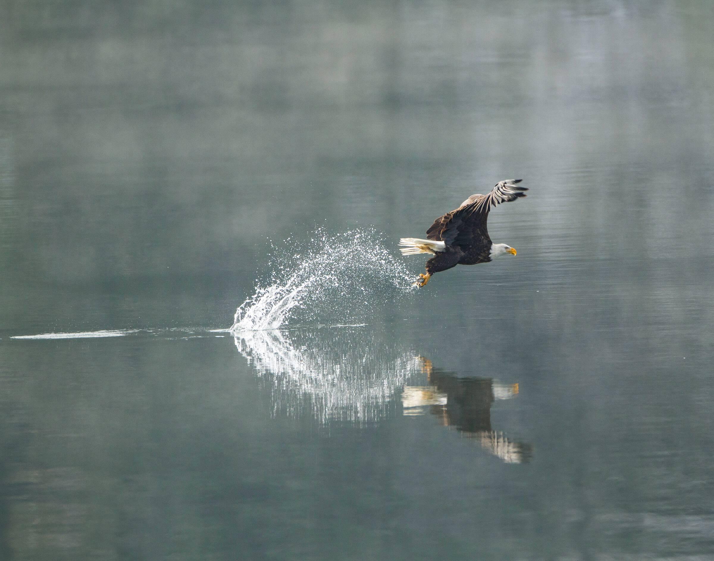 Eagle watching, Coeur d'Alene. Photo Credit: Lake Coeur d'Alene Cruises