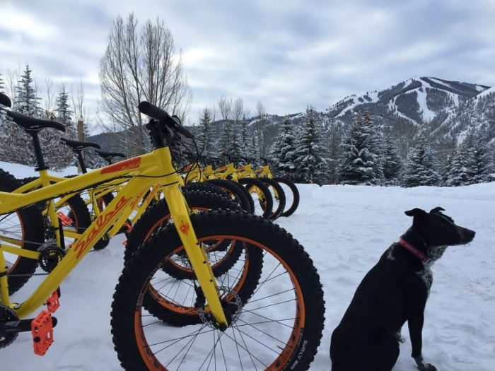 Bikes and a furry friend await the ride.