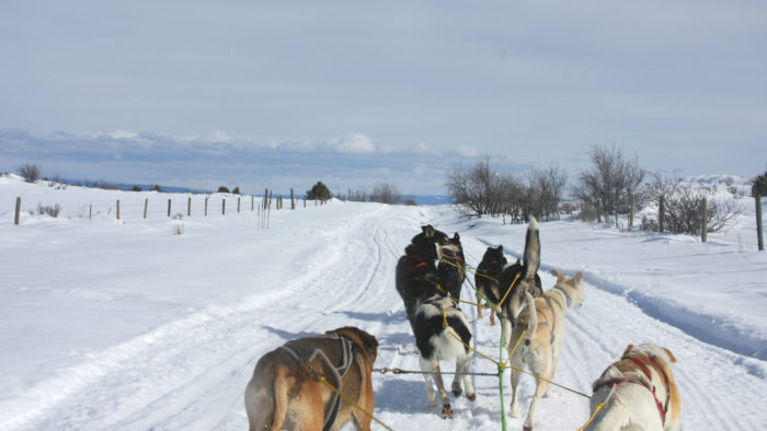 Dog sled tour in Ashton, Idaho