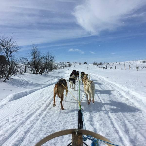 Experience Idaho on a Dog Sled