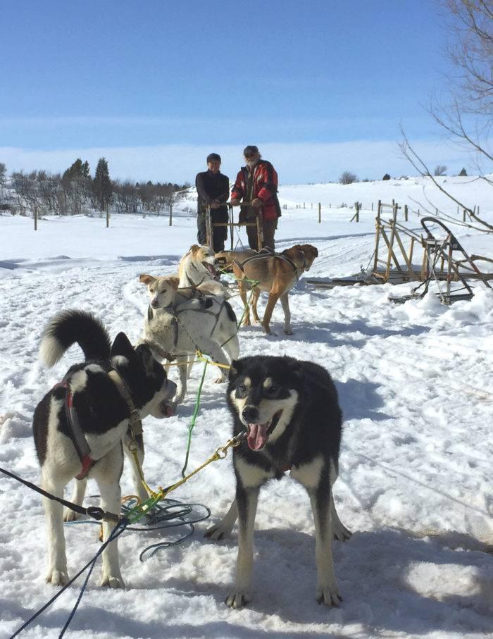 dog sled tour 25