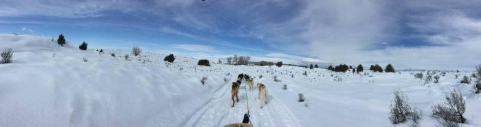 dog sled tour pano