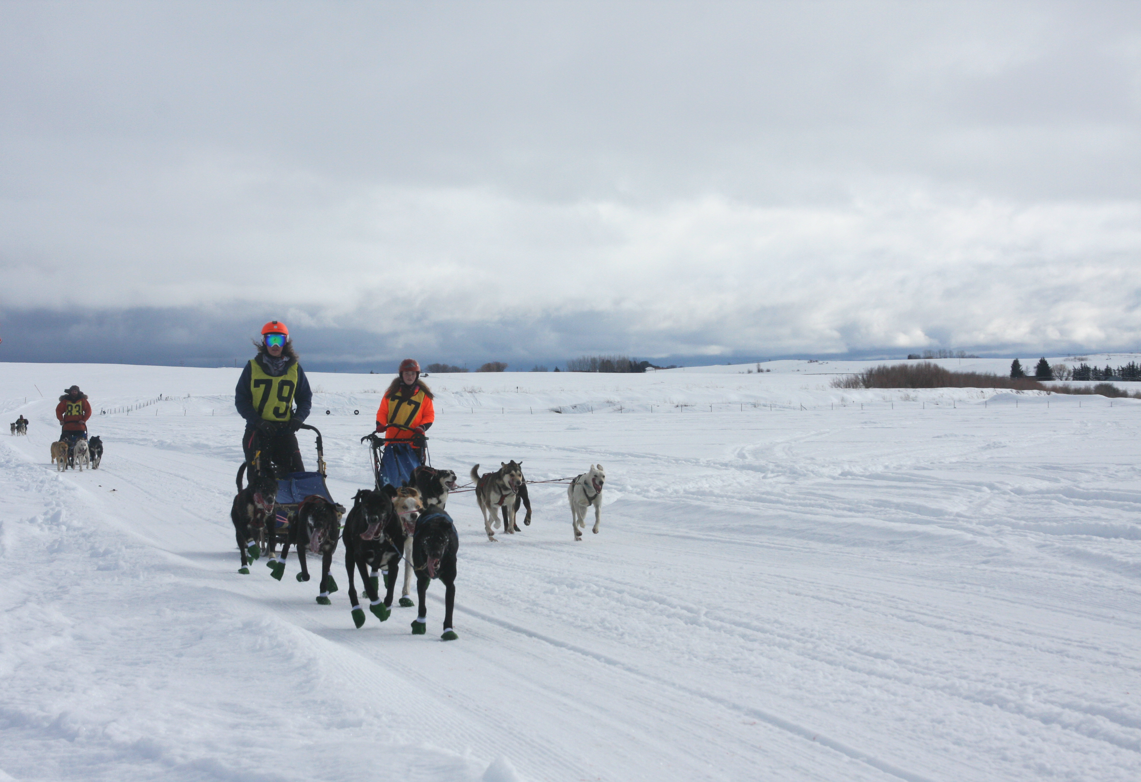 A Dog Sled Teams Heads Out On The American Dog Derby Course