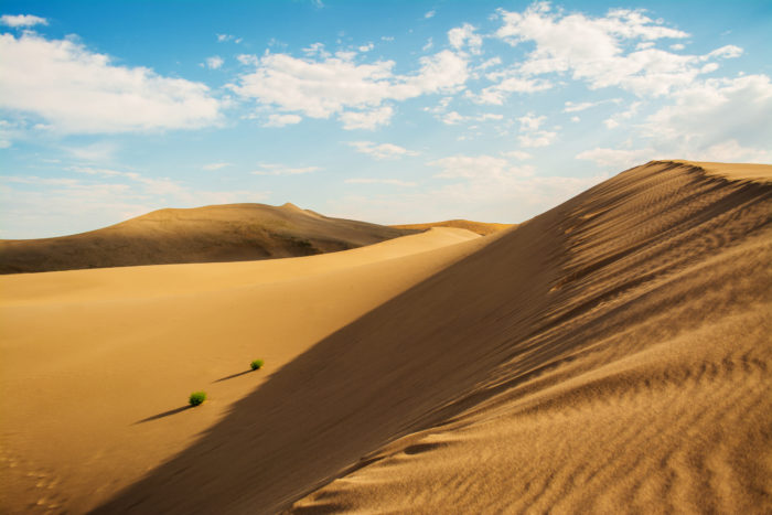 A picture of sand dunes in the summer.