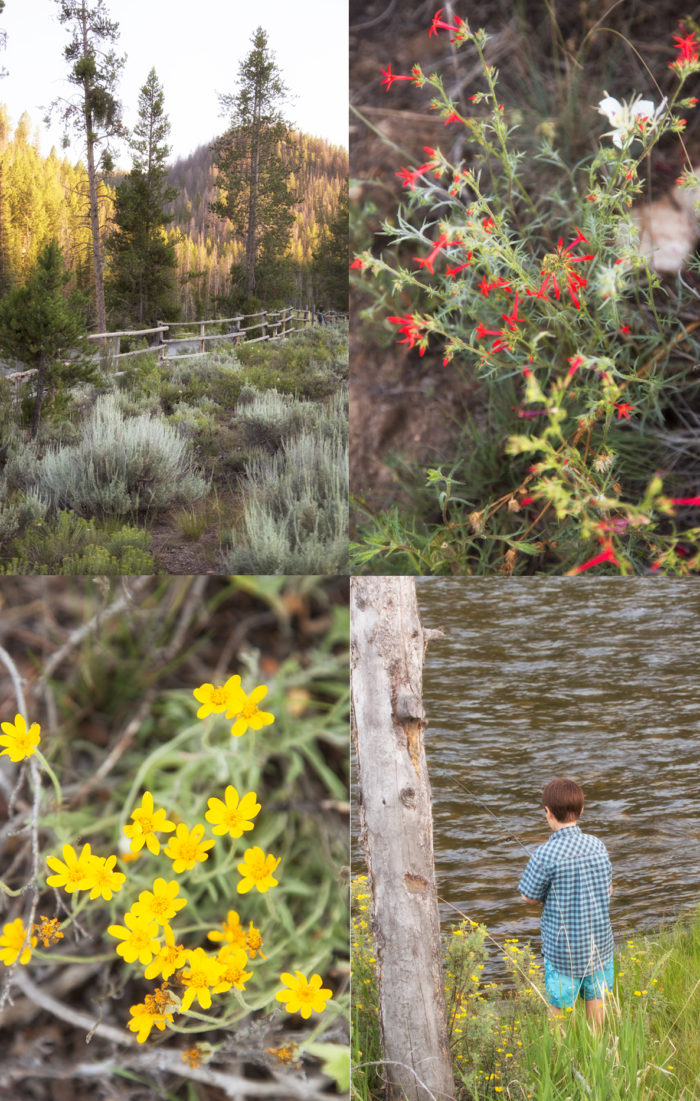 Collage: wildflowers, mountain view, boy fishing.