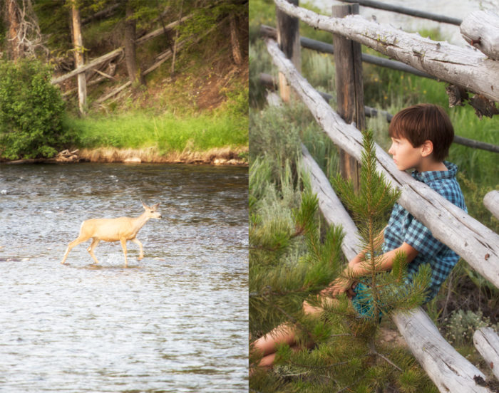 Collage: Deer crossing the river; child relaxing, on a wooden rail fence.