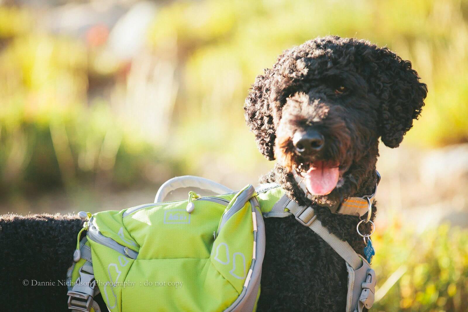Idaho Dog Friendly Cities