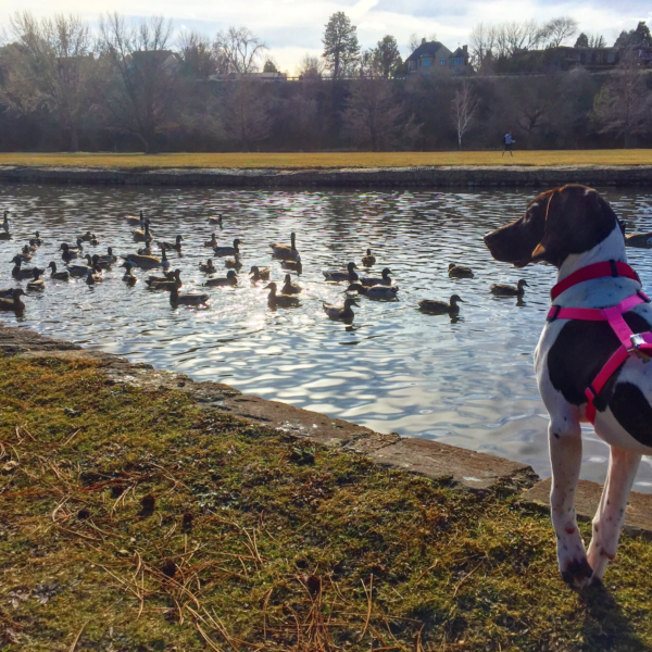 5 Idaho Cities with Dog-Friendly Adventures