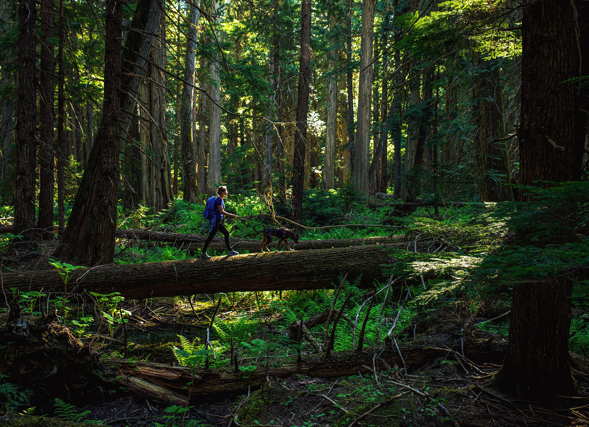 Exploring The Wilds Of Priest Lake And The Upper Panhandle
