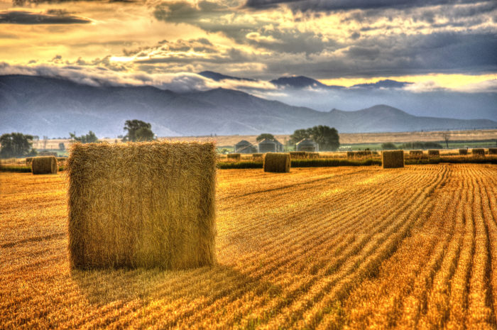 sunrise on hay fields.