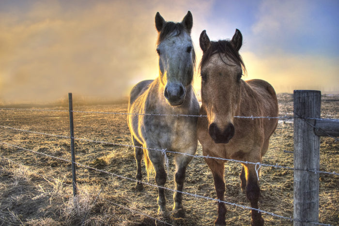 Foggy sunrise in Ammon with two horses.