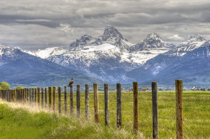 a hawk sitting on fence in front of the Teton Mountain Range.