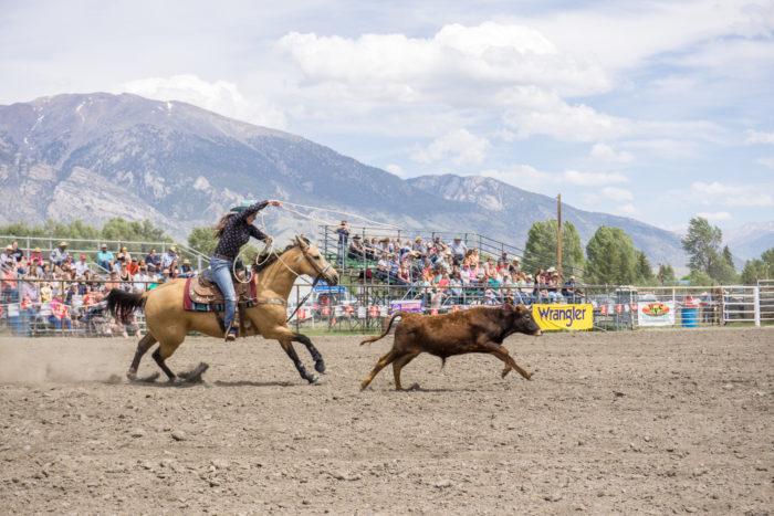 calf roping at a mountain rodeo