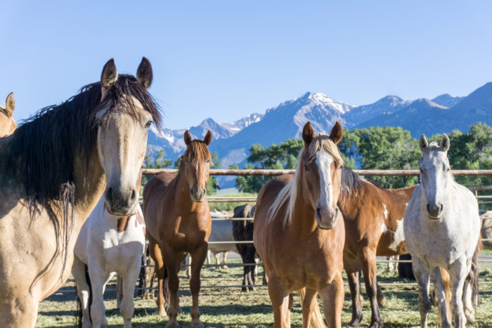 several horses in front of a mountain background