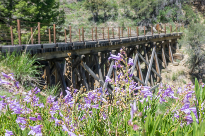 Trestle bridge surrounded by wildflowers.