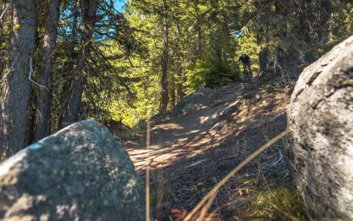 mountain bike rider going through dense forest