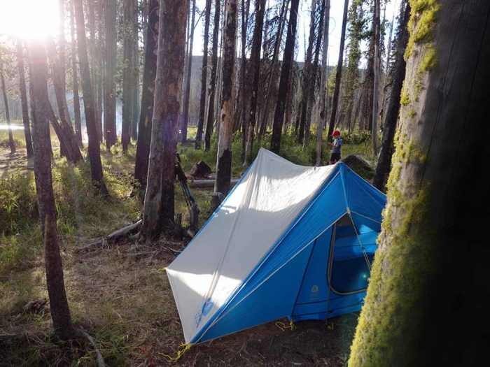 tent at a campsite in pine forest