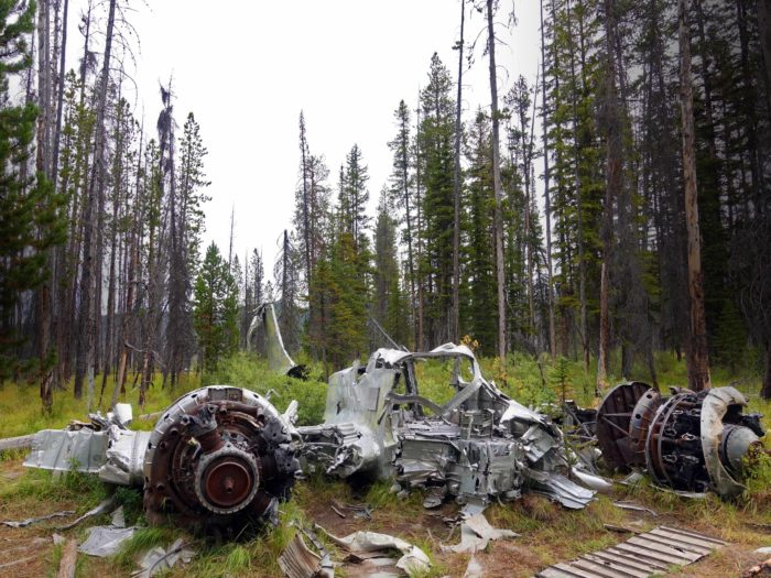 old crashed plane in pine forest