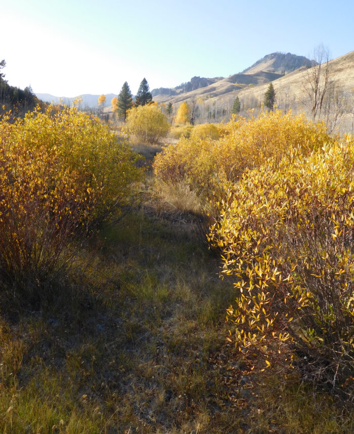 fall colors in a mountain valley