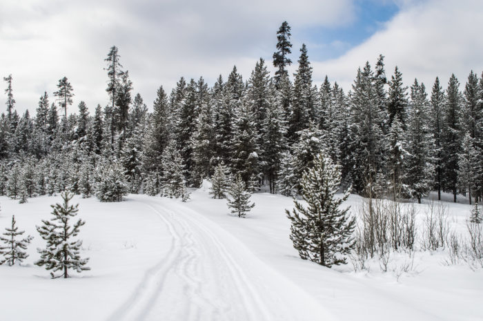 snowshoe trail surrounded by pine trees