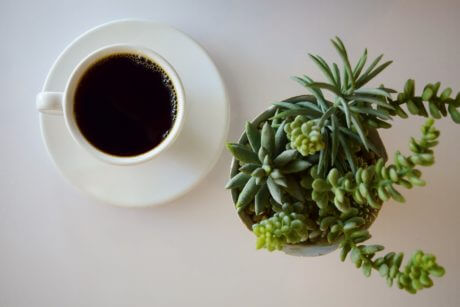 cup of coffee sitting next to a plant