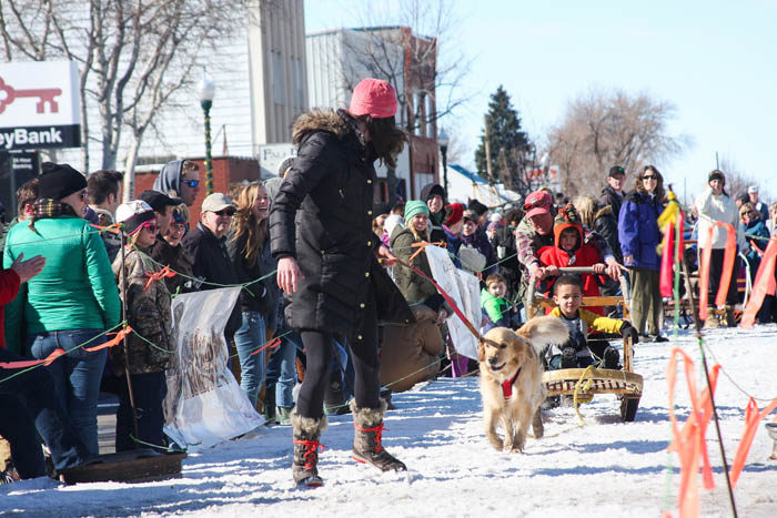 American Dog Derby, Ashton. Photo Credit: Idaho Tourism
