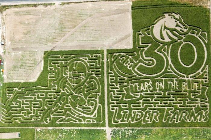 Linder Farms corn maze.