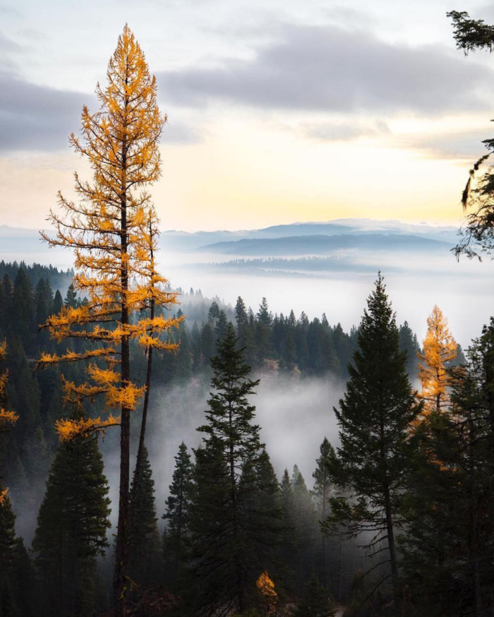 Boise National Forest. #VisitIdaho Share: @knowledgeableidiot