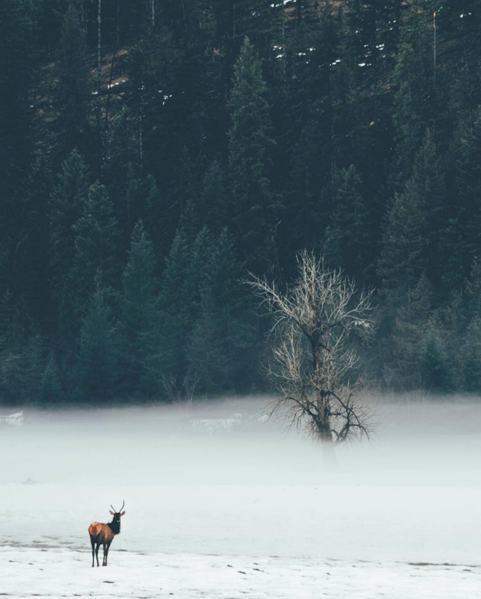 St. Joe River, Idaho. #VisitIdaho Share: @hikester_