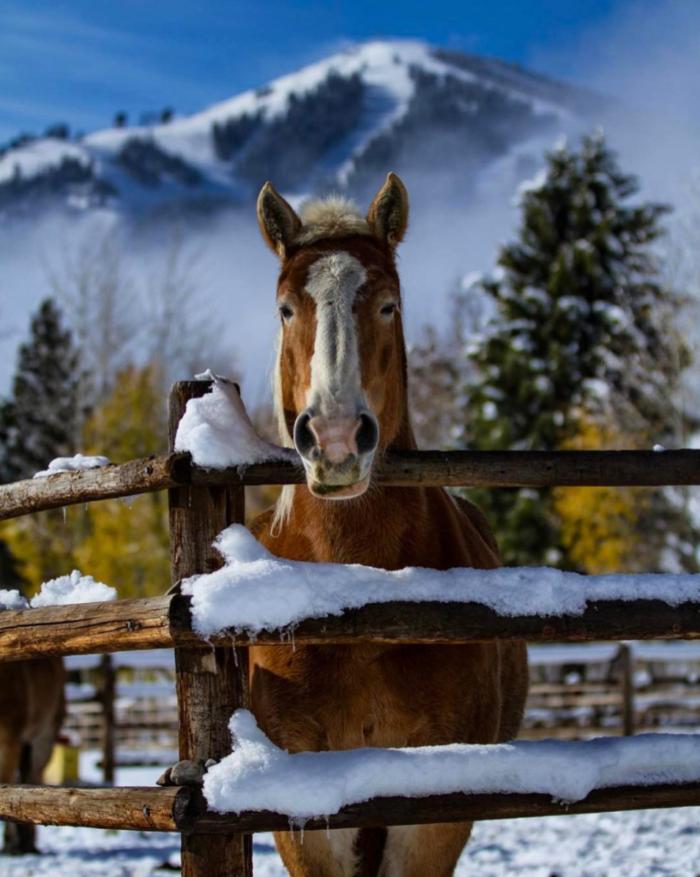 Sun Valley, Idaho. #VisitIdaho Share: @oliverguyphoto