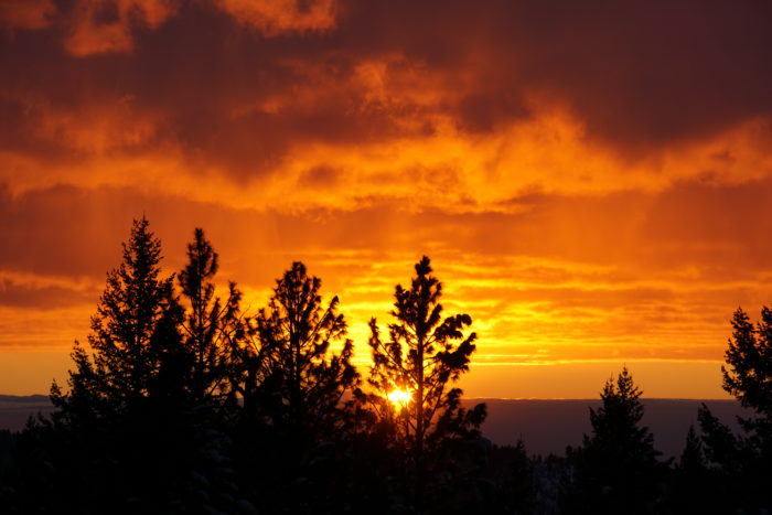 Dark trees silhouetted against a brilliant orange, cloud-laced sky.