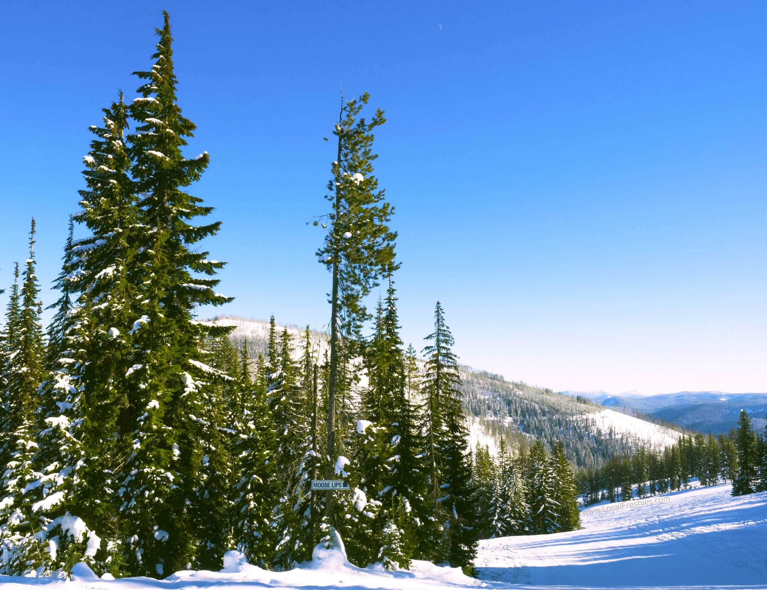 Scenic view from Lookout Pass