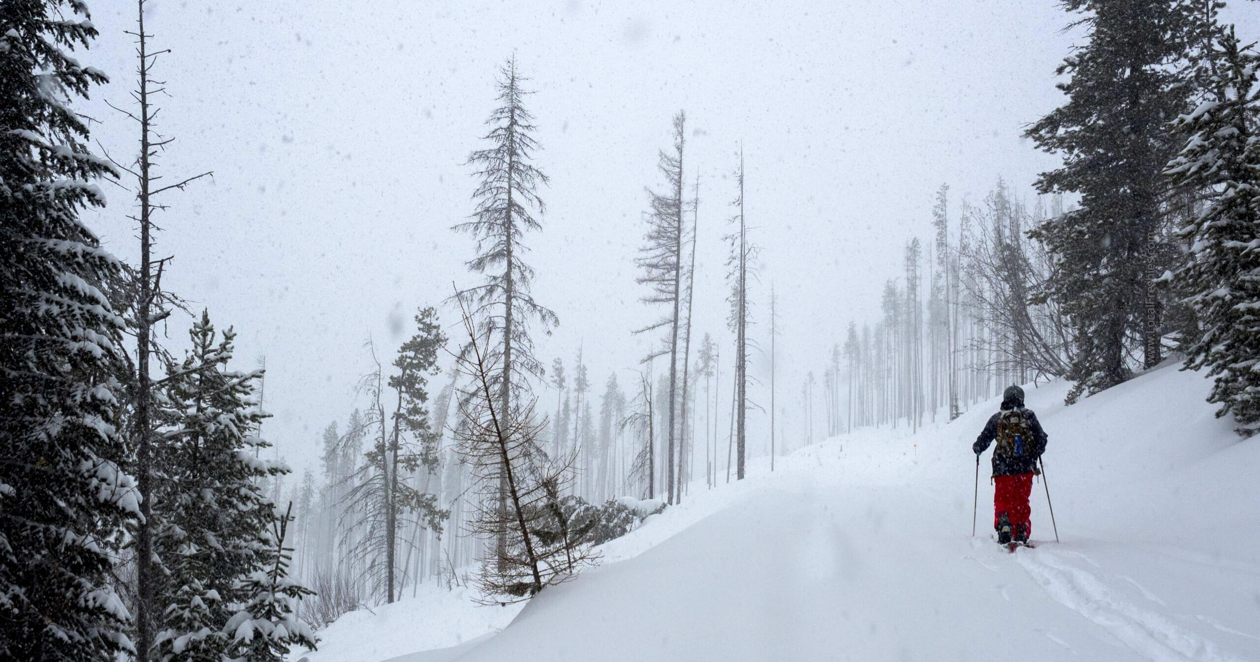 skier in backcountry snow